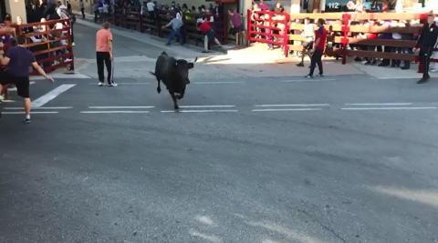 Primer encierro de vaquillas en Navarra tras la pandemia