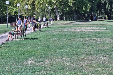 Este agosto sin lluvias está haciendo mella en parques y jardines de Pamplona. Algunos presentan un tono amarillento y un aspecto árido.
