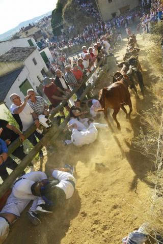 Las vacas de la ganadería Lastur, de Itziar(Guipúzcoa), han protagonizado un cuarto Pilón muy limpio y rápido.