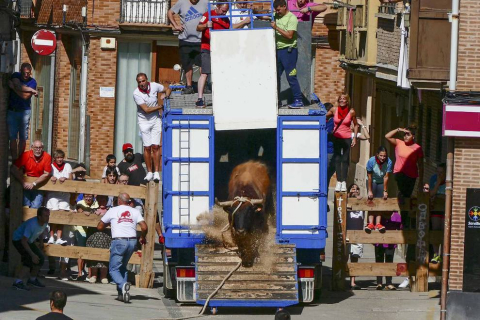 El toro ensogado en una de las jornadas festivas de Lodosa (14 de septiembre)