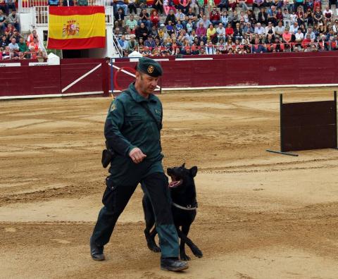 Todas las secciones en activo de la Guardia Civil en Navarra participaron este domingo en una exhibición en la plaza de toros de Estella, para conmemorar el 175 aniversario de su fundación.