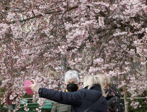 Pese a que la primavera astronómica no comenzará hasta el 20 de marzo, los árboles de los parques y jardines de Pamplona ya lucen sus flores.