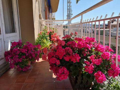 Balcón florido.