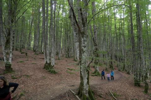 Fotografías de la Selva de Irati en este puente otoñal