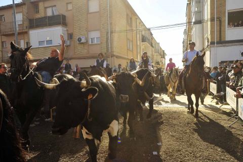 Día del Caballo en Marcilla.