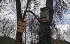 Instaladas cajas nido para aves insectívoras que combatirán a la polilla del boj
