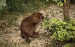 castores-pamplona
