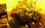 Tres detenidos en la Ribera con marihuana y dos pistolas simuladas