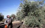 La Ribera bate su récord productivo de aceite con 3 millones de litros