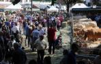 Concurso-subasta de ganado vacuno pirenaico en Elizondo