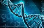 Usan ADN para fabricar el termómetro más pequeño del mundo