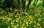 """Las plantas son capaces de reconocer si sus vecinas son """"de la familia"""""""