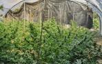 Desarticulados varios puntos de cultivo de marihuana en Navarra