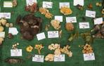 Hongos, pocos y raros en un año sin otoño