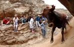 Cinco heridos leves y una vaca despistada, en el tercer Pilón de fiestas de Falces