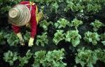 """Mujeres rurales: """"Vivir y trabajar en el medio rural no puede ser cosa de heroínas"""""""