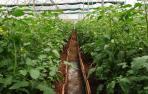 Pamplona impulsa un huerto urbano ecológico comunitario en la Txantrea