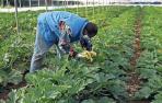 25 casos en un brote en Carcastillo que afecta a trabajadores agrarios