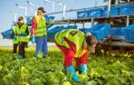 Florette cerrará 2018 con un récord de ventas de 190 millones