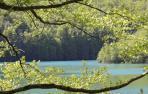 Selva de Irati_Francis Vaquero_Turismo de Navarra
