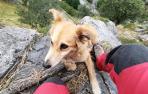 La perra rescatada