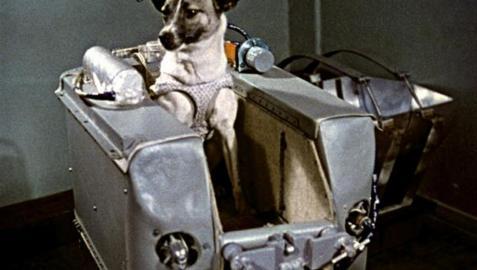 56 años del lanzamiento de Laika al espacio