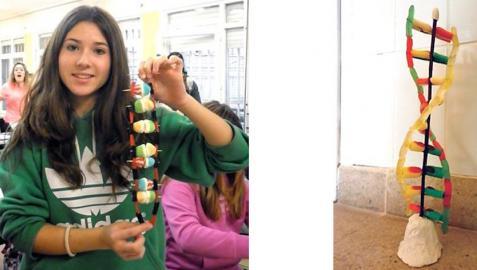 Una alumna muestra una figura hecha con golosinas que simula la estructura del ADN