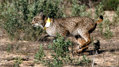 'WildMed', un filme de naturaleza sobre Sierra Morena