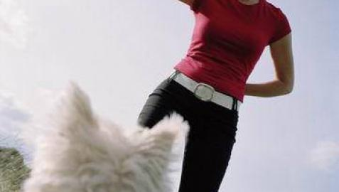 Se estrena DogTv, un canal de televisión dirigido a los perros