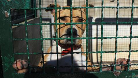 Pamplona expedienta a 29 dueños de perros peligrosos en este 2014