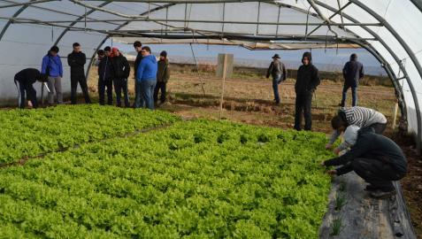 Agricultores en una jornada técnica celebrada el año pasado en un invernadero de Sartaguda.