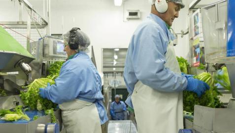 Florette invierte 2 millones para duplicar su capacidad productiva en Arguedas