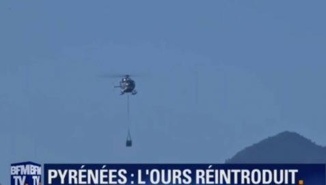 Soltada la primera osa en Aspe por un helicóptero de la gendarmería francesa