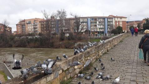 Las palomas eligen Santa Engracia