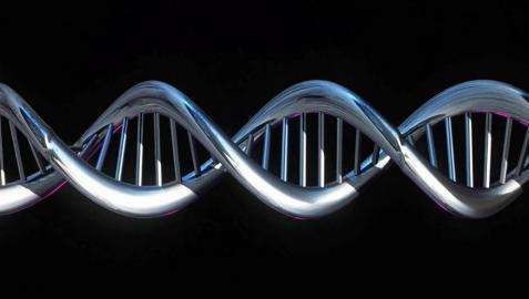 Científicos de EE UU modifican genéticamente embriones humanos