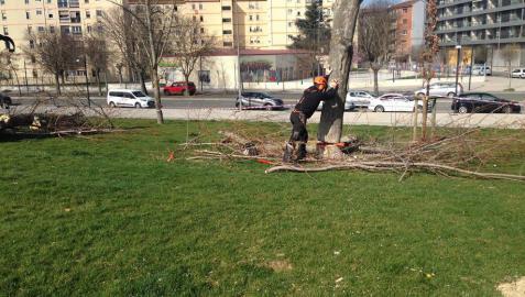 Imagen de la tala denunciada por Gurelur y llevada a cabo por el Ayuntamiento en la Milagrosa.