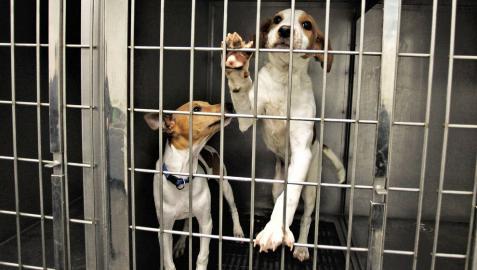 Recogidos más de 700 perros y 850 gatos abandonados en 2018