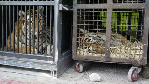 Madrid prohibirá los circos con animales salvajes