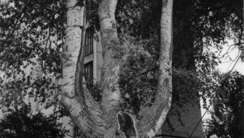 Era marzo de 1969 y los primeros vecinos del emergente barrio de Arrosadía ocupaban aquellas recién creadas viviendas