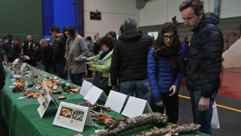 Ultzama programa desde el viernes actividades por el IX Día del Hongo