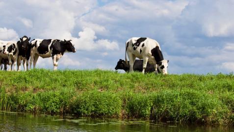 Un prado virtual para las vacas