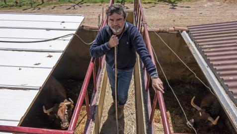Miguel Reta, en su finca de La Tejería, de Grocin, sobre una estructura que divide dos recintos de vacas bravas.