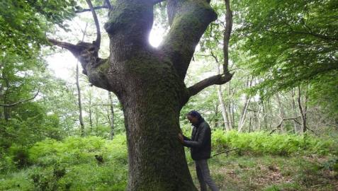 El abrazo del bosque