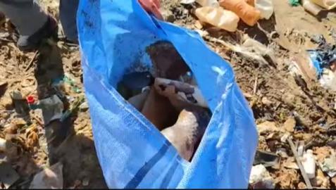 Vídeo: Limpian el contaminado lago Uru Uru de Bolivia convertido en un basurero
