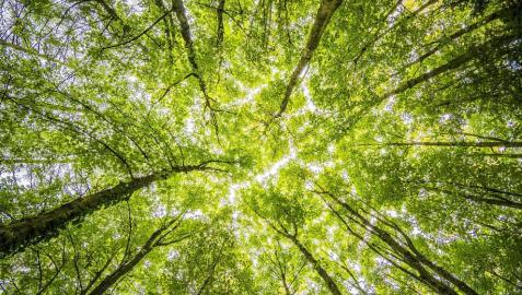 ¿Cuál es el origen del Día Internacional de la Tierra?