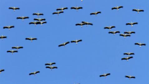 Un proyecto de observatorio de aves en el Pirineo optará a fondos de la UE