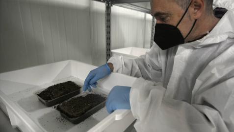 Se instala en Olite la empresa Nutrinsect que producirá harina de grillo
