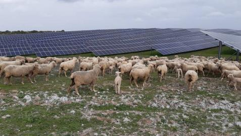 Iberdrola tramita 370 MW fotovoltaicos en Peralta en Navarra