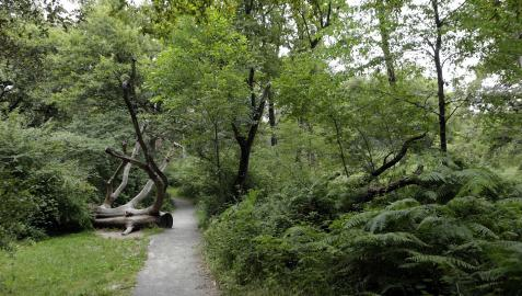 Uno de los senderos del espacio natural del Bosque de Orgi, en el mes de julio de 2016