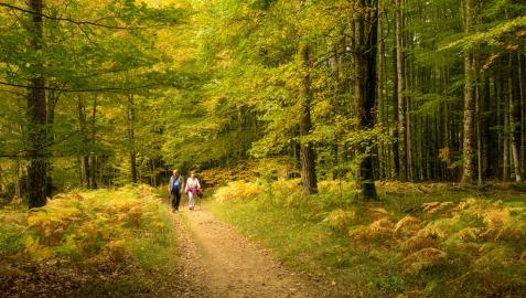 Selva de Irati, una conexión directa con la naturaleza.